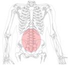 ¿Cómo evitar síntomas de lumbalgia?