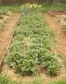 Los cultivos ecológicos  caseros